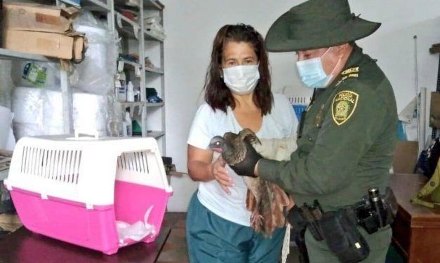 La CAR liberó animales en Reserva Natural Carpatos de Guasca