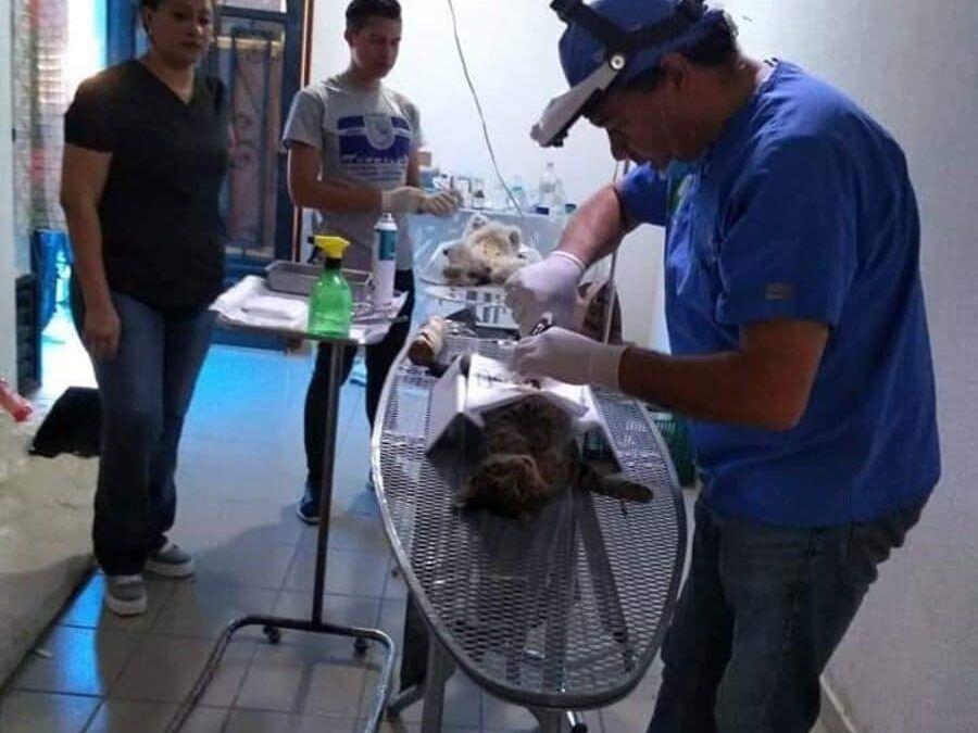 Unidad móvil quirúrgica para animales